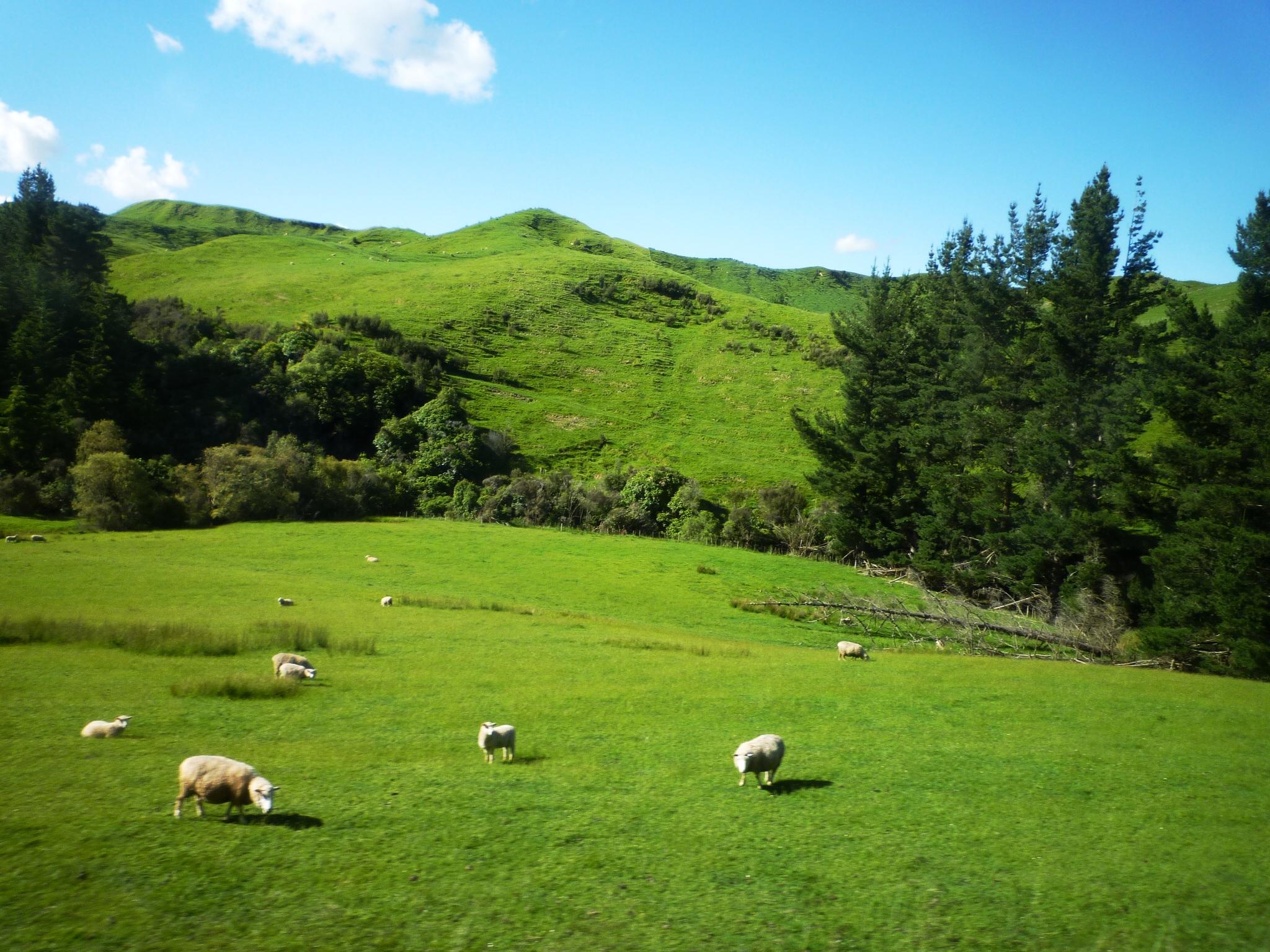 大自然に癒される旅!お金をかけずにニュージーランドを満喫しよう