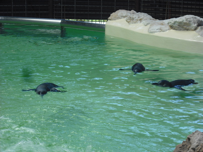 大都市を一歩出れば海洋動物の楽園!ペンギン島で出会う野生動物