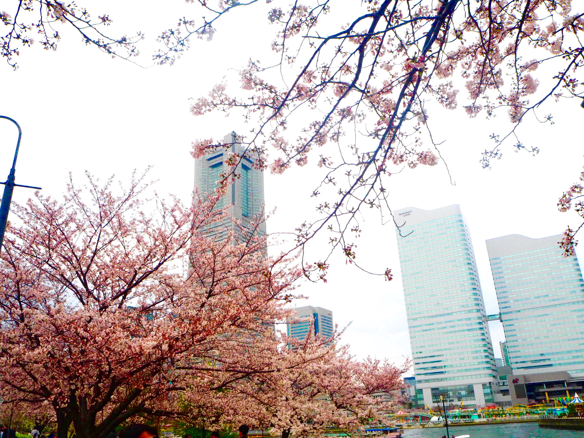 [EN] How to Enjoy Spring in Japan