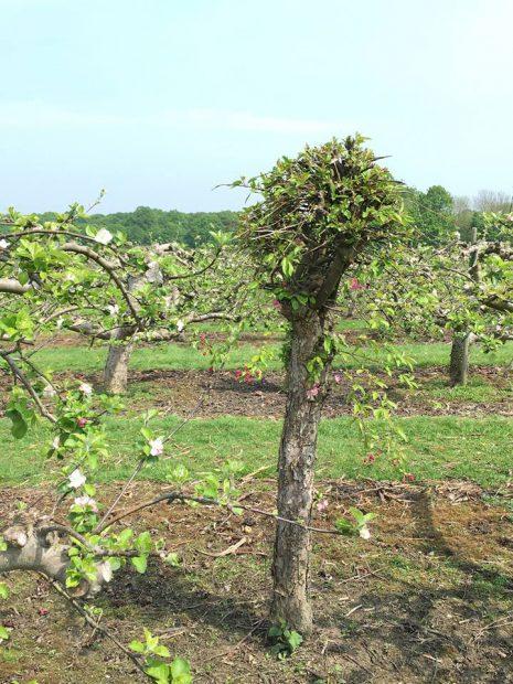 britain-hush-heath-estate-winery-11