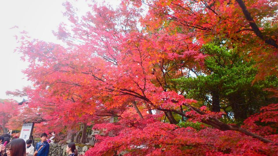 [EN] Autumn in Kyoto